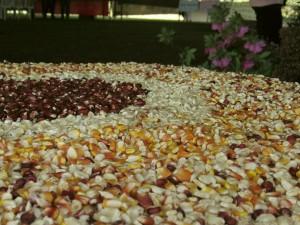 Feira de sementes Mandiritiba (28_08_2016) Fotos Mônica Andrade Luz (3)